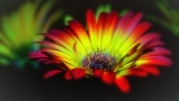 Фото бесплатно цветок, гербера, гербер