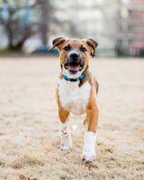 Фото бесплатно собака, домашнее животное, животное, дикая природа, дикий, щенок, лапа, университет Джорджии, uga, афины, бакстер, владелец собаки, любитель собак, млекопитающие, очаровательны
