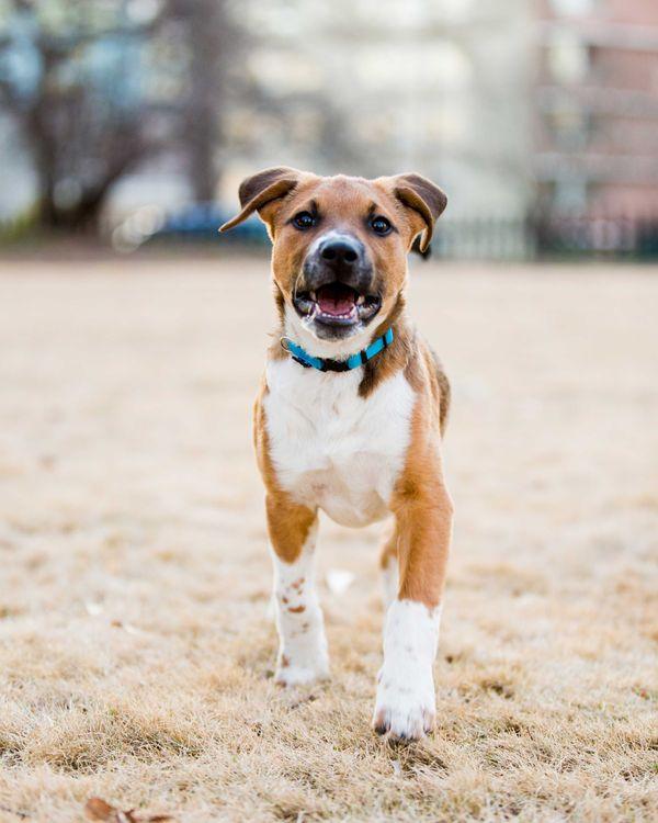 Фото бесплатно собака, домашнее животное, животное - на рабочий стол