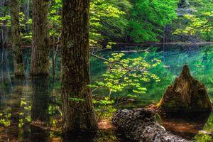 Скачать красивую заставку о водоём, лес