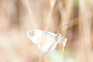 Фото бесплатно рука, крыло, белый
