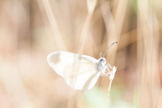 Photo free arm, wing, white