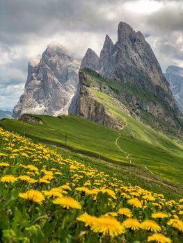 Фото бесплатно цветок, весна, цветы, природа, лето, путешествие, дикая, форма, драматическая, драма, грубый, вершина