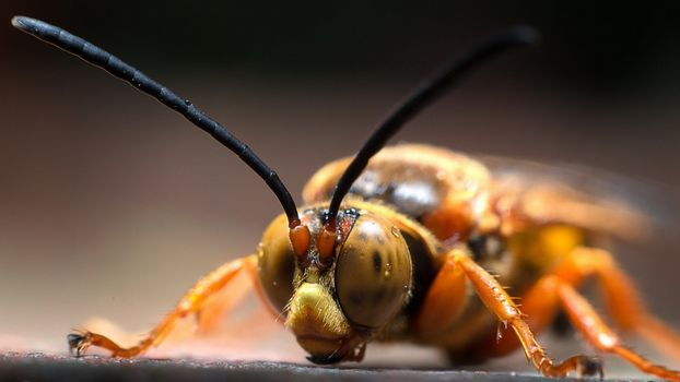 Фото бесплатно Оса, пчела, насекомые