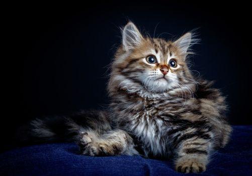 Фото бесплатно домашнее животное, котенок, поза