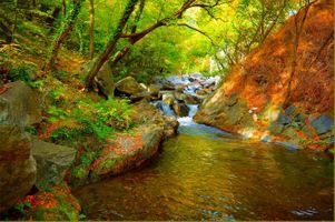 Бесплатные фото лес,деревья,река,водопад,осень,природа,пейзаж