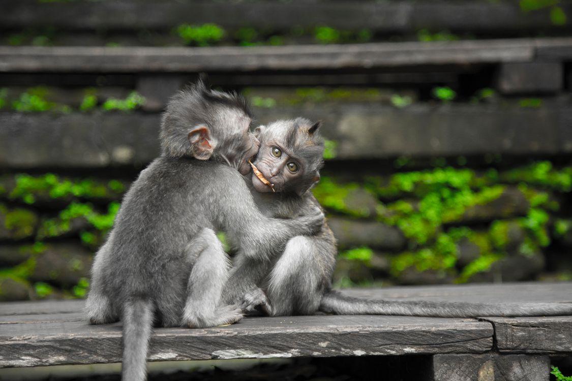 Фото обезьяны природа на открытом воздухе - бесплатные картинки на Fonwall