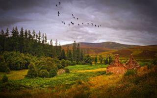 Бесплатные фото Autumn,Scotland,осень,поле,холмы,лес,деревья