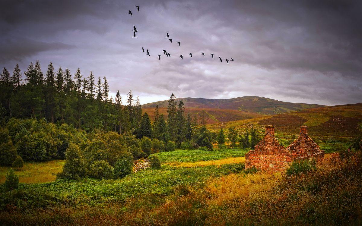 Фото бесплатно Autumn, Scotland, осень, поле, холмы, лес, деревья, небо, птицы, журавли, заброшенный домик, руины, природа, пейзаж, пейзажи - скачать на рабочий стол