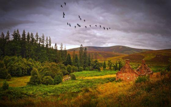 Бесплатные фото Autumn,Scotland,осень,поле,холмы,лес,деревья,небо,птицы,журавли,заброшенный домик,руины