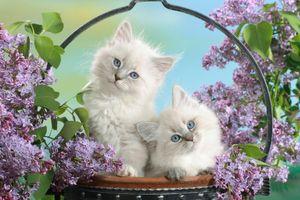 Котята позируют в цветах сирени