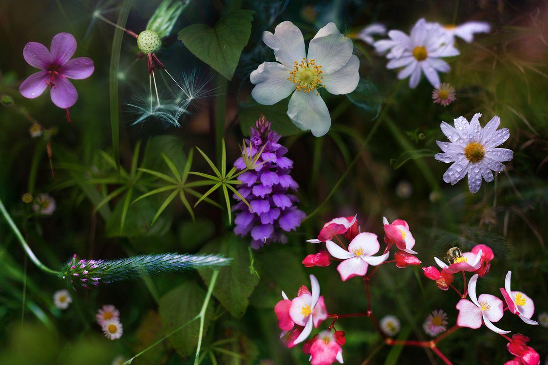 Цветы - растения · бесплатное фото
