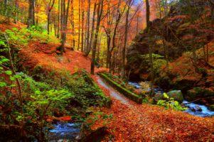 Бесплатные фото магическая река,осень,мост,краски осени,лес,камни,деревья