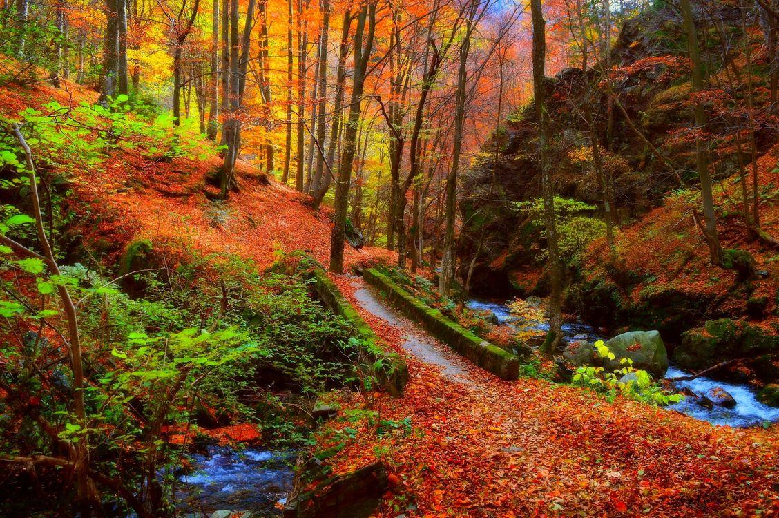Фото бесплатно магическая река, осень, мост - на рабочий стол