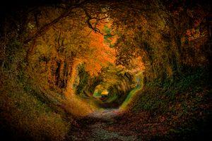 Фото бесплатно дорога, лес, тоннель