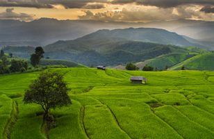 Фото бесплатно Ban Papongpieng, тропы, домики