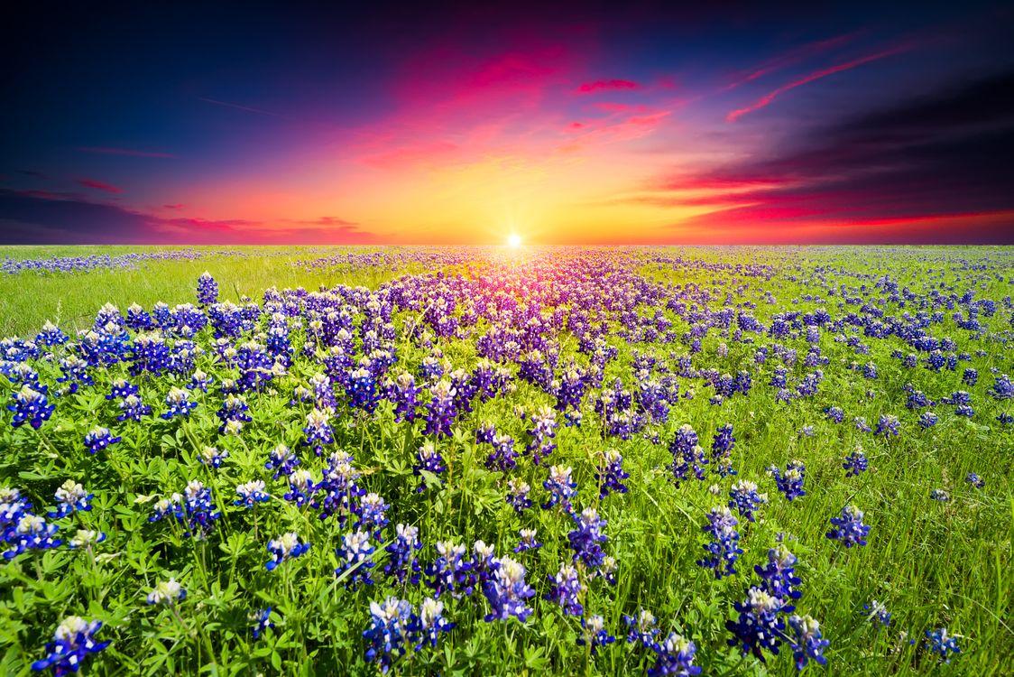 Фото бесплатно цветение, пейзаж, закат - на рабочий стол