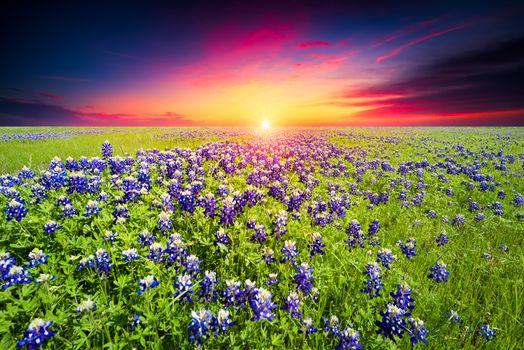 Photo free bloom, landscape, sunset