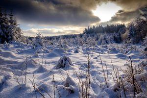 Заставки зима,снег,сугробы,деревья,лес,природа,пейзаж