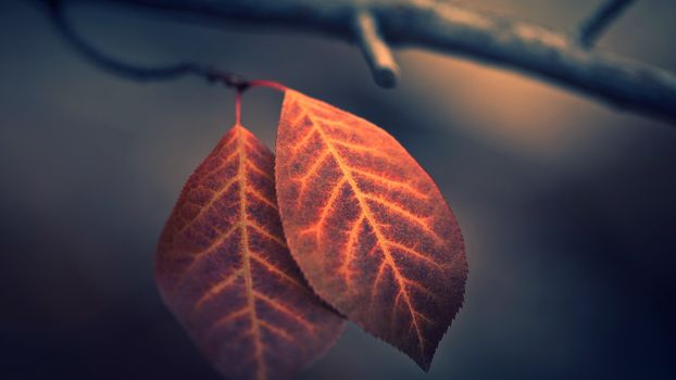 Фото бесплатно осень, листья, веточка
