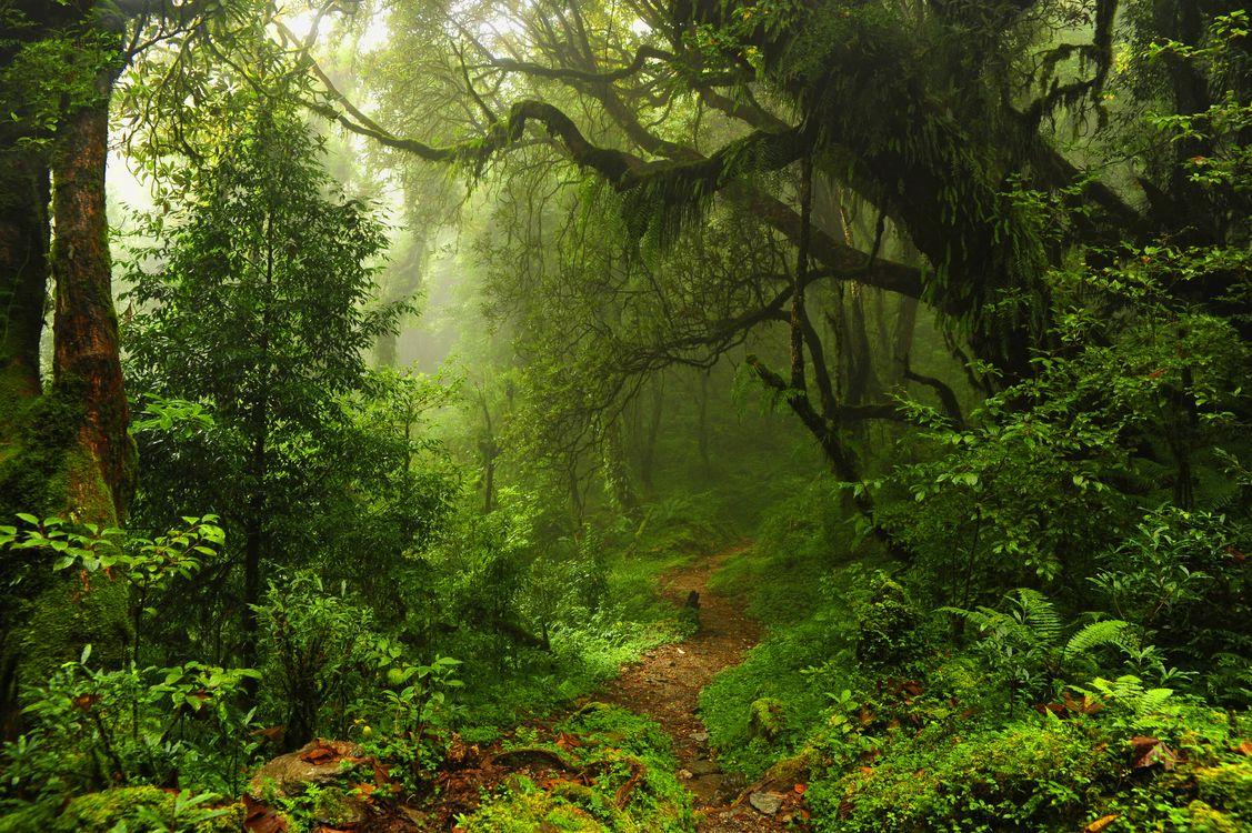 Обои Jungle, лес, деревья, тропинка, дорога, туман, пейзаж картинки на телефон