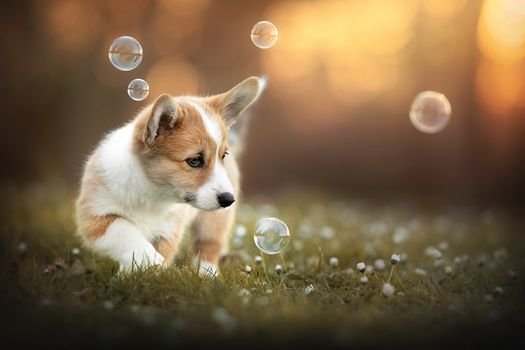 Puppy and soap bubbles · free photo