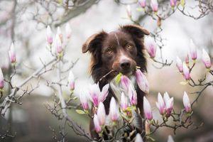 Портрет с цветущей магнолией · бесплатное фото