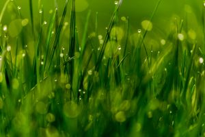 Бесплатные фото трава,капли,роса,макро,панорама