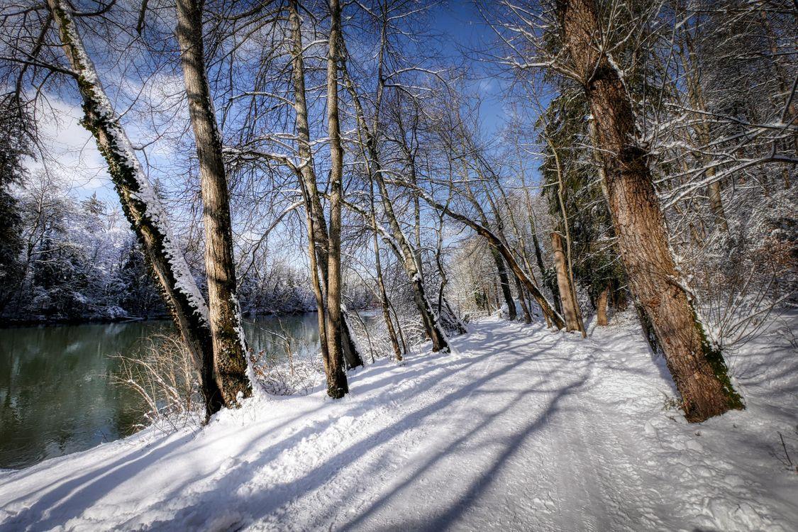 Фото бесплатно зима, дорога, лес, деревья, река, снег, природа, пейзаж, пейзажи