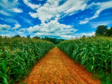 Photo free corn field, corn, arable land
