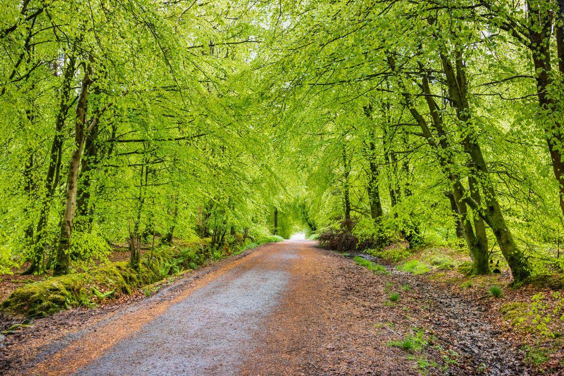 Лесная дорога поздним летом · бесплатное фото