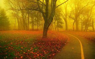 Бесплатные фото Осенний парк,дорога,осень,осенняя листва,туман,деревья,пейзаж