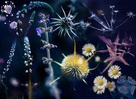 Фото бесплатно растения, макро, манипуляции