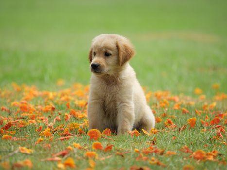 Малыш на поляне с лепестками цветов