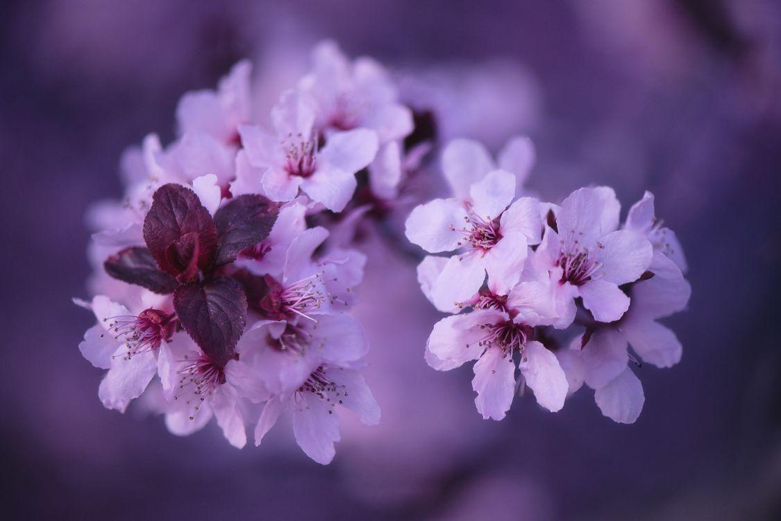 Фото бесплатно ветка, sakura, цветущая ветка - на рабочий стол