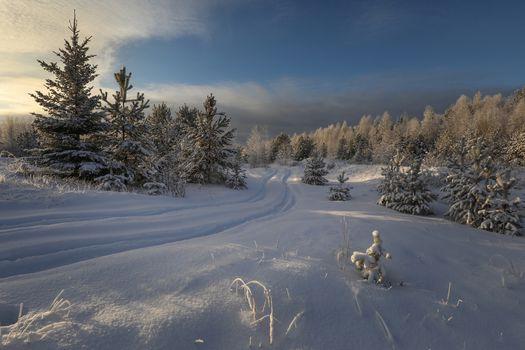 Фото бесплатно следы, закат, снег