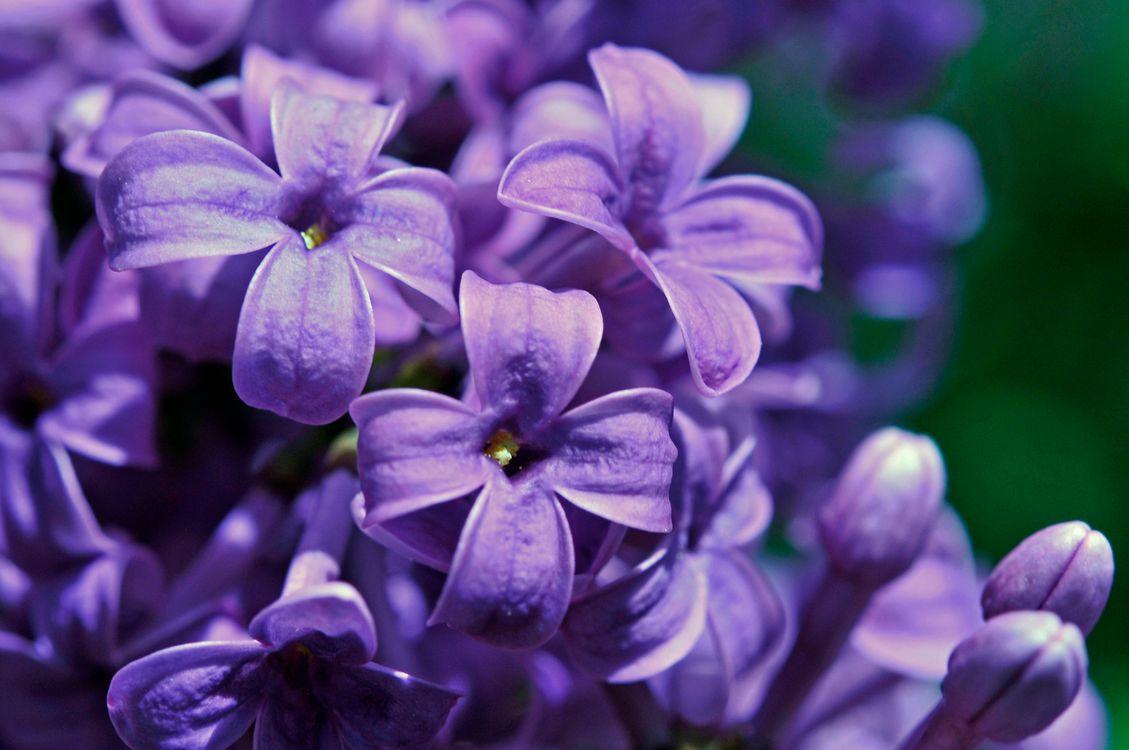 Обои цветение, фиолетовый, цветы картинки на телефон