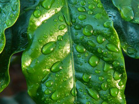 Заставки вода, падение, растение