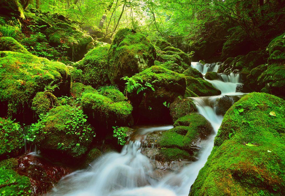 Фото бесплатно водопад, зелёный, лес, камни, речка, деревья, мох, природа, пейзаж, Япония, пейзажи
