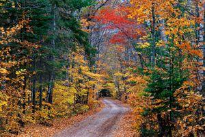 Бесплатные фото краски осени,осенние краски,осень,лес,деревья,дорога,природа