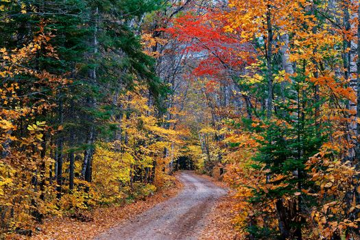 Photo free the colors of autumn, forest, nature