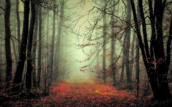 Photo free autumn colors, trees, path