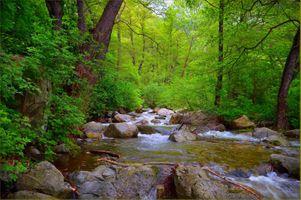 Фото бесплатно камни, лес, пейзаж