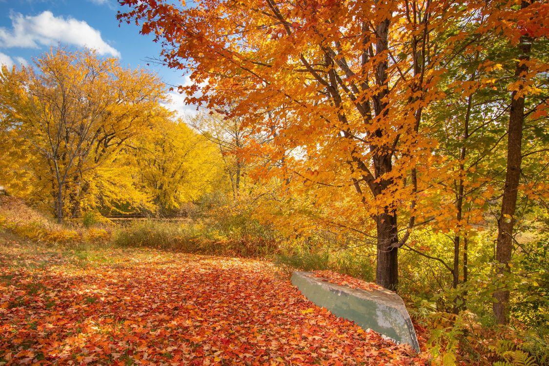 Фото бесплатно осень, осенние листья, осенние краски, деревья, лодка, природа, пейзаж, пейзажи