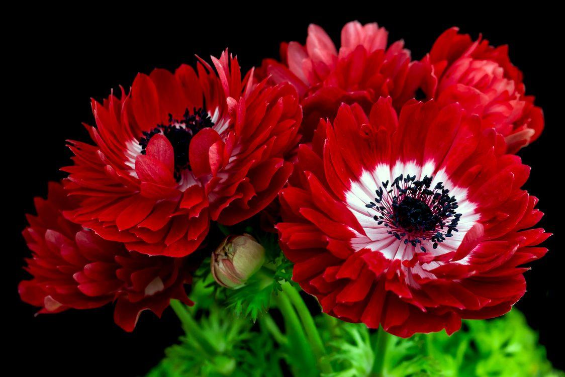 Фото бесплатно пионы, букет, пион, цветок, цветы, макро, флора - на рабочий стол