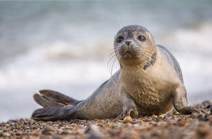 Заставки тюлень, малыш, берег