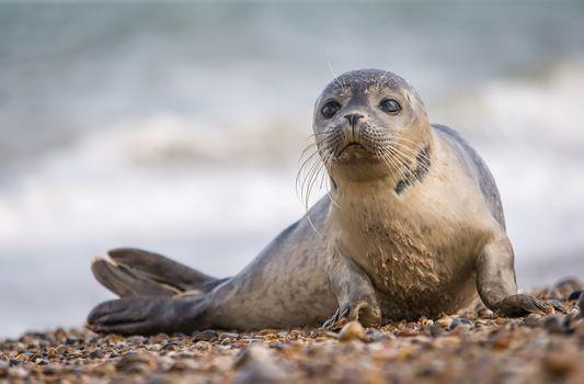 Photo free seal, kid, shore