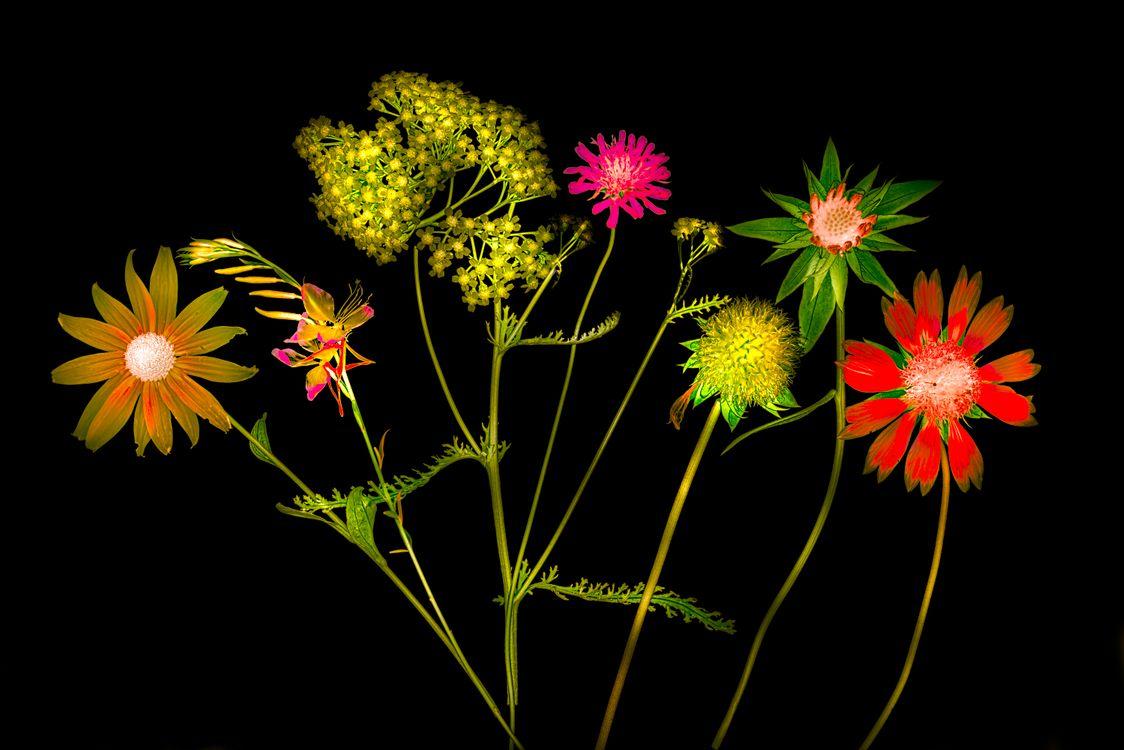 Лепестки цветов · бесплатное фото