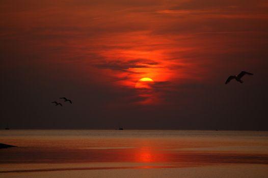 Фото бесплатно Закат, Вечер, Птицы