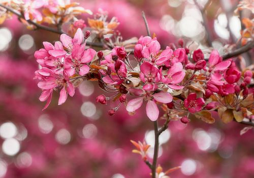 Бесплатные фото весна,цветущая ветка,цветы,цветение,флора